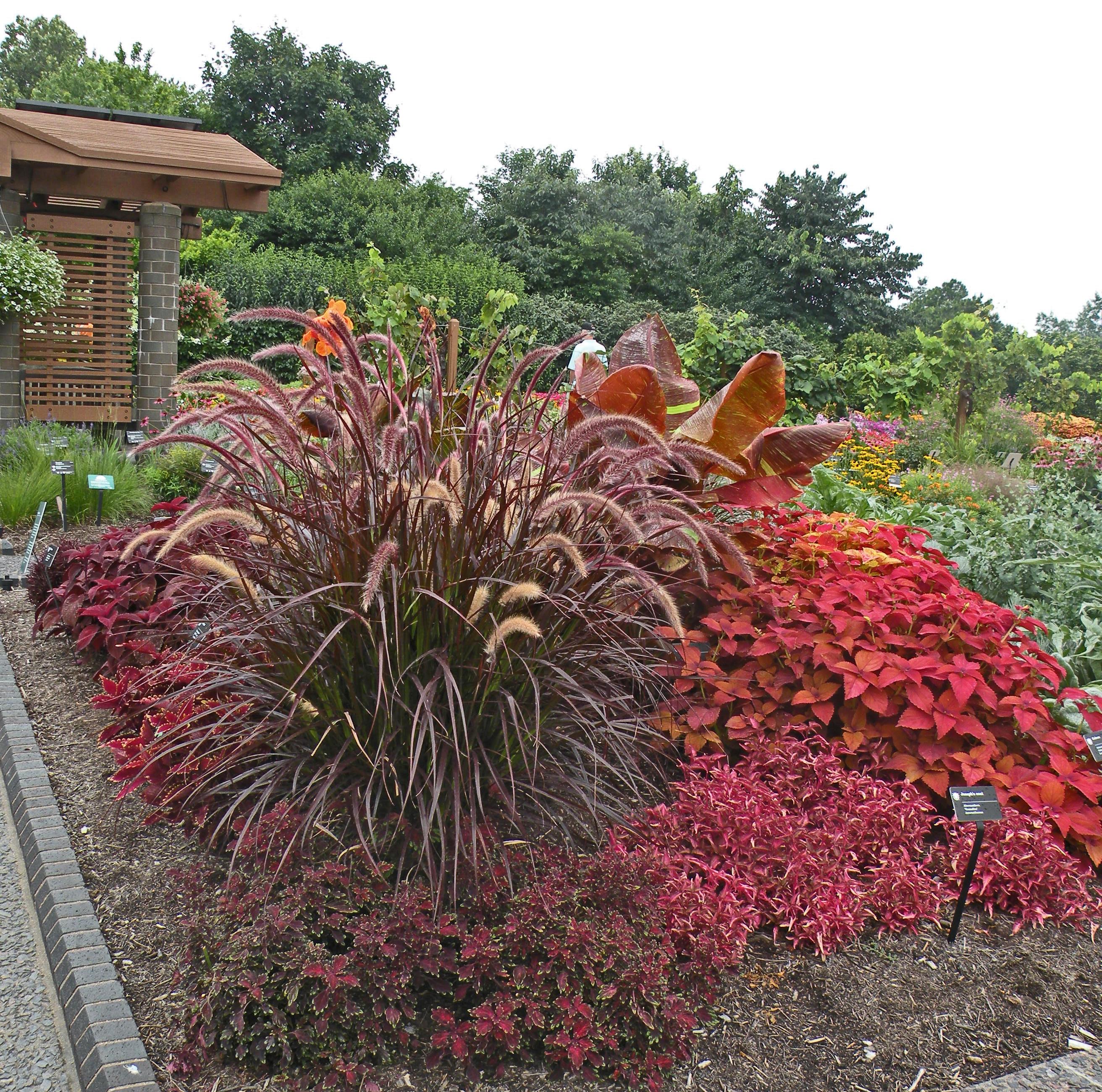 cleveland landscape designer adds annuals to the garden. Black Bedroom Furniture Sets. Home Design Ideas