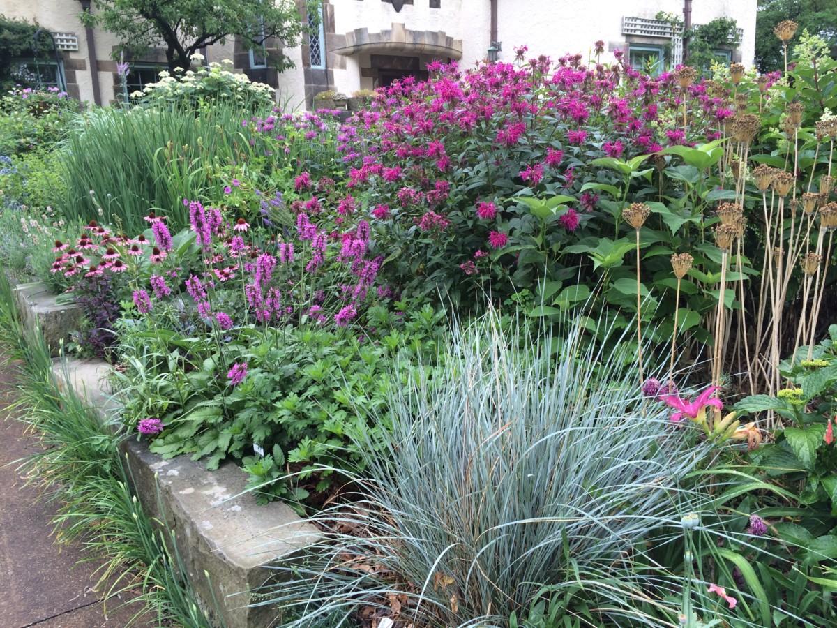 High performance low maintenance perennials part 4 for Colorful low maintenance perennials