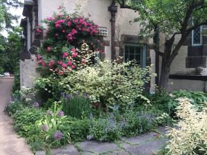 Rosa 'John Cabot', Fallopia japonica 'Variegata', Allium christophii, Nepeta 'Dropmore Hybrid', Iris sibirica 'Double Standard' in June