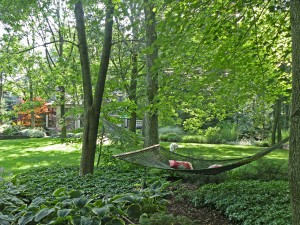 Hammock set in groundcover between house and studio
