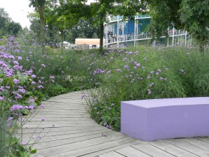 Massed Verbena bonariensis as color echo of purple bench at Floriade 2012