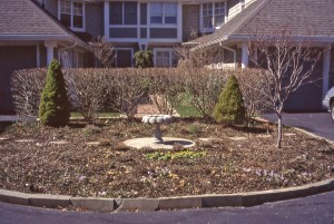 Client's perennial garden in early April