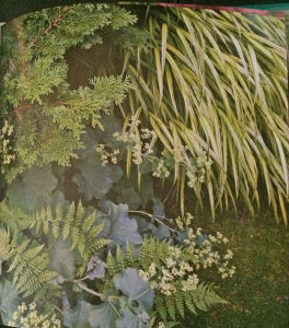 Fine Foliage part shade combo of Chaemacyparis obtusa 'Gracilis', Hakonechloa macra 'Aureola' and Alchemilla mollis