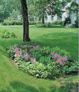 Small residential rain garden in Minnesota