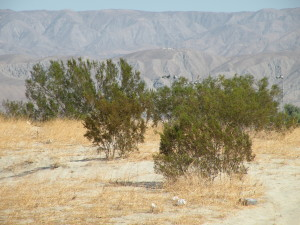 Unirrigated desert area in Southern California