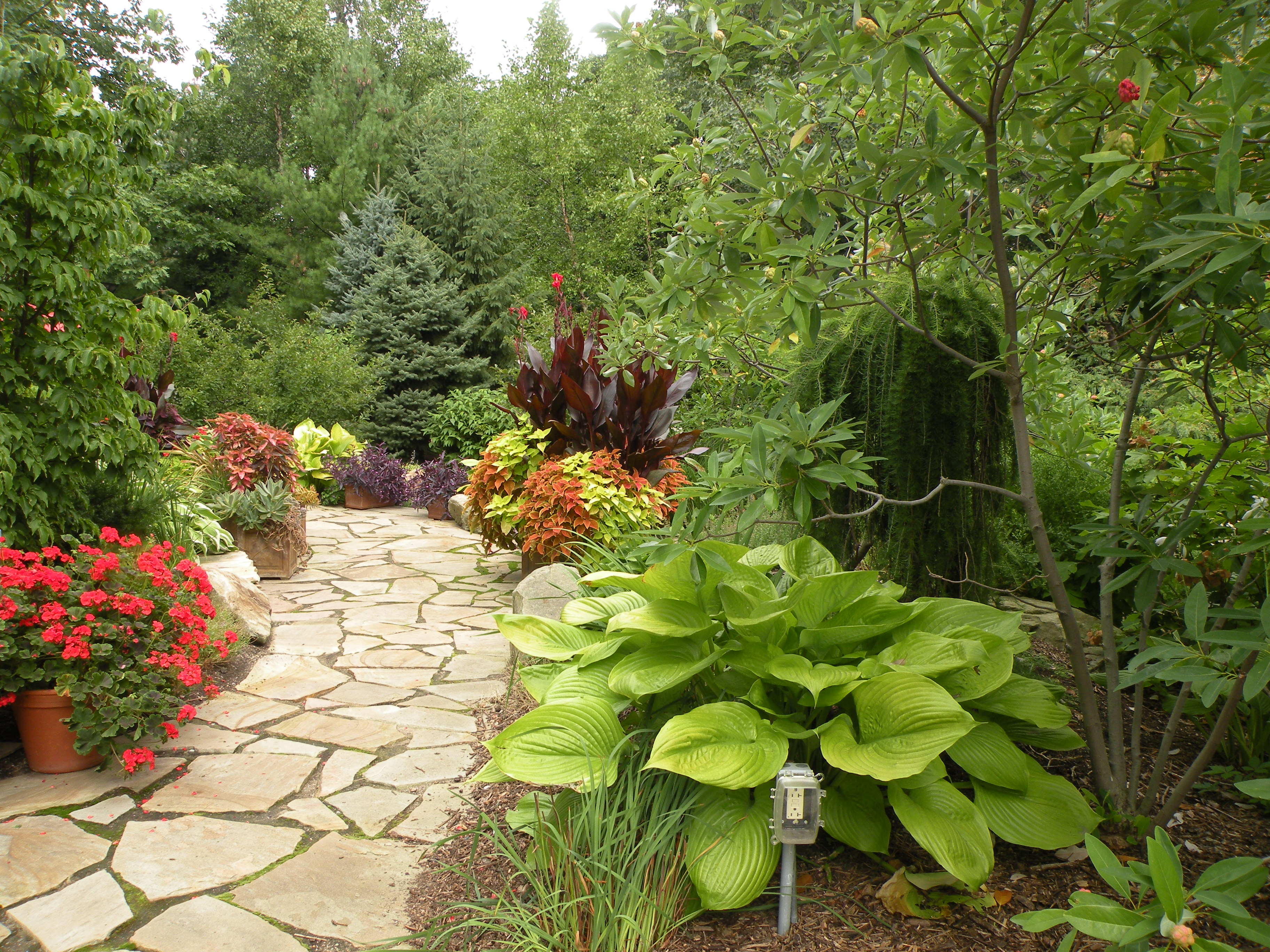 Cleveland landscape designer adds annuals to the garden for color annuals and tropicals as supplement to perennials and conifers izmirmasajfo