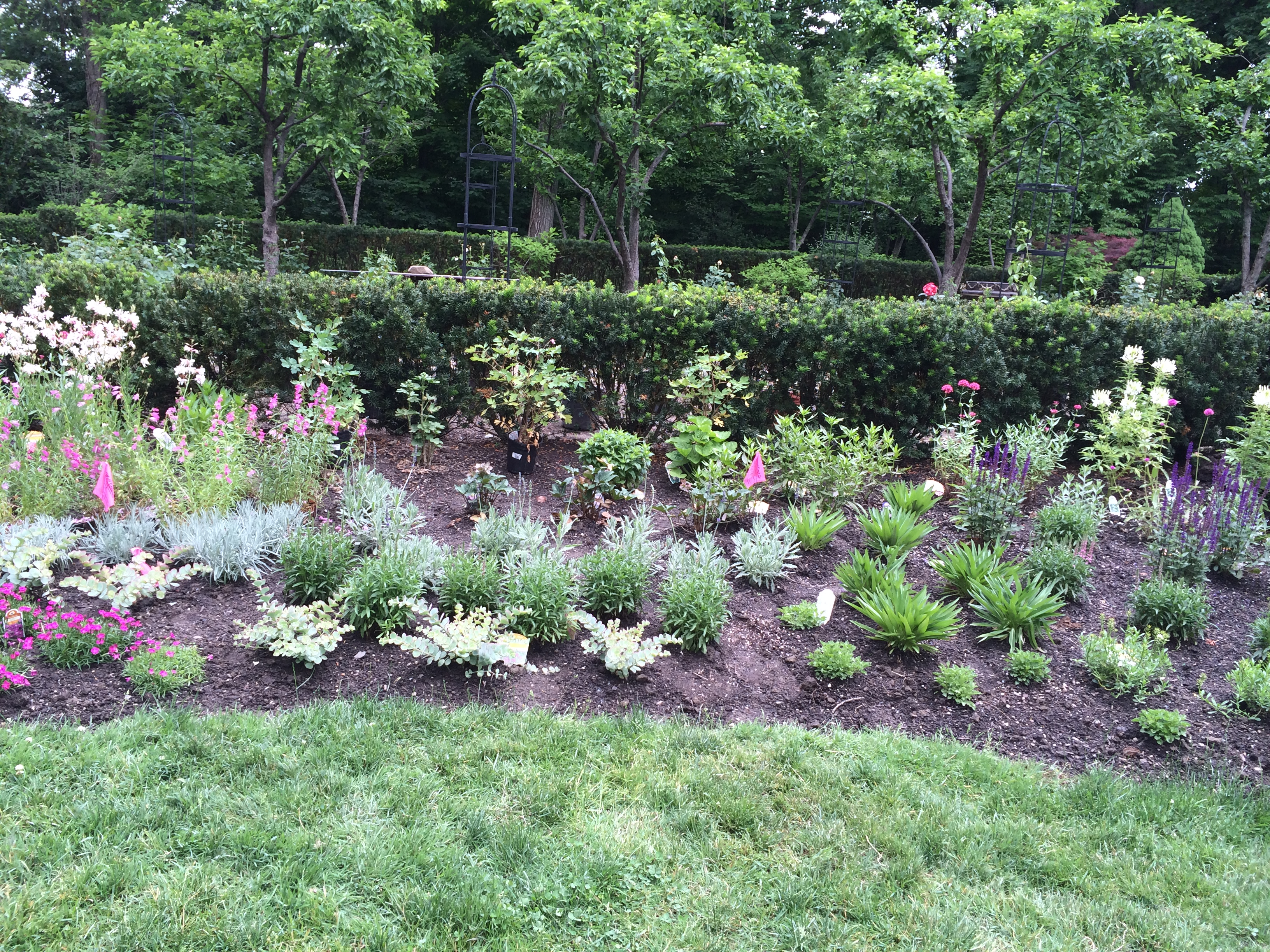 Perennial Garden As Planted By Former Designer