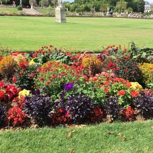 Border beds: Begonia, Pelargonium, Opal Basil, Gaillardia, Pennisetum rubrum, chard, Tagetes, Petunia; Jardin du Luxembourg); Paris; 7/19/15