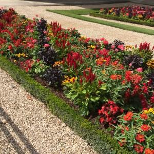 Formal beds in front the Sénat; Diagonal design; Celosia, Salvia, Begonia, Zinnia, Opal Basil, dwarf Rudbeckia, Petunia; Jardin du Luxembourg); Paris; 7/19/15