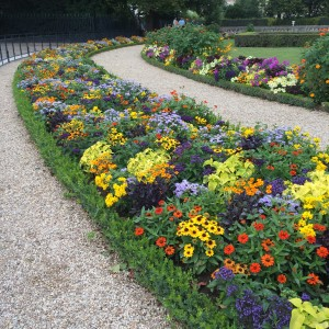 Formal beds behind the Sénat; tapestry design with diagonals; Dwarf Rudbeckia, Opal Basil, Zinnia, Ageratum, Heliotrope, Coleus; Jardin du Luxembourg); Paris; 7/19/15