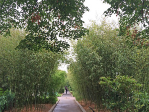 La Promenade Planteé with bamboo that shades and frames the path