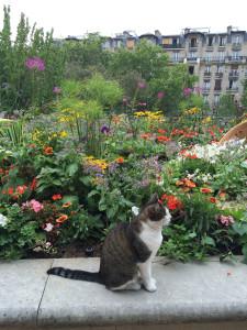La Promenade Planteé adjacent garden (Jardin de Reuilly) with raised bed; and resident cat; Cleome, Pelargonium, Petunia, Gomphrena, Gaillardia,  Rudbeckia hirta, Dahlia, Cyperus, Brugmansia 'Snowbank'