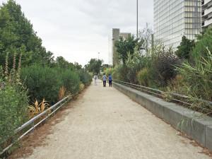 Alleé Arthur Rimbaud is planted alternative to walking along Quai François Mauriac: Arundo donax 'Variegata', Vitex; Paris; 7/20/15
