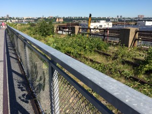 Naturalized planting in new section;  High Line; 8/2/15