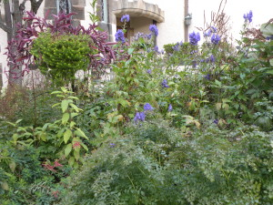 Fall color: Euphorbia polychroma, Aconitum carmichaelii 'Arendsii', Thalictrum orientale foliage, deadheads of Veronicastrum; 18405 west bed; 10/17/11