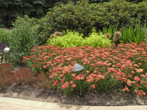 Euphorbia 'Bonfire', Panicum 'Heavy Metal', Achillea, Agastache, Allium deadheads, Crocosmia foliage, existing Rhododendron