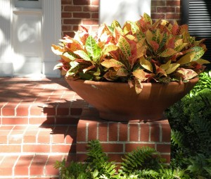 Terracotta bowl with Croton