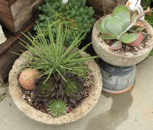 Tufa troughs used for succulents and Agave