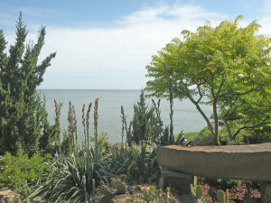 Xeriscape with Juniper, Yucca 'Hofer's Blue', Opuntia, and Rhus laciniata in garden on Lake Erie in mid June