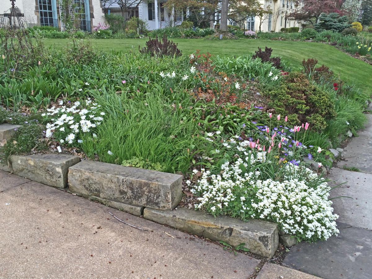 5-3-15-Spring-bulbs-and-perennials-1