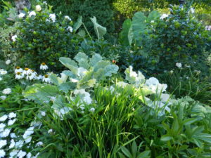 White garde nwith varying textures and forms in St.Paul garden