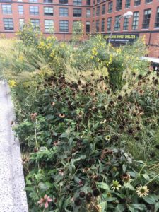 Echinacea deadheads and blooms, Silphium, Calamagrostis arundinacea 'Bracytricha'