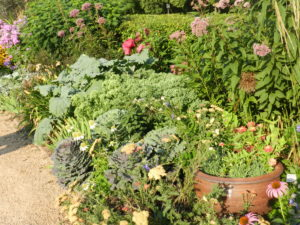 Integration of bold foliage vegetables in perennial border