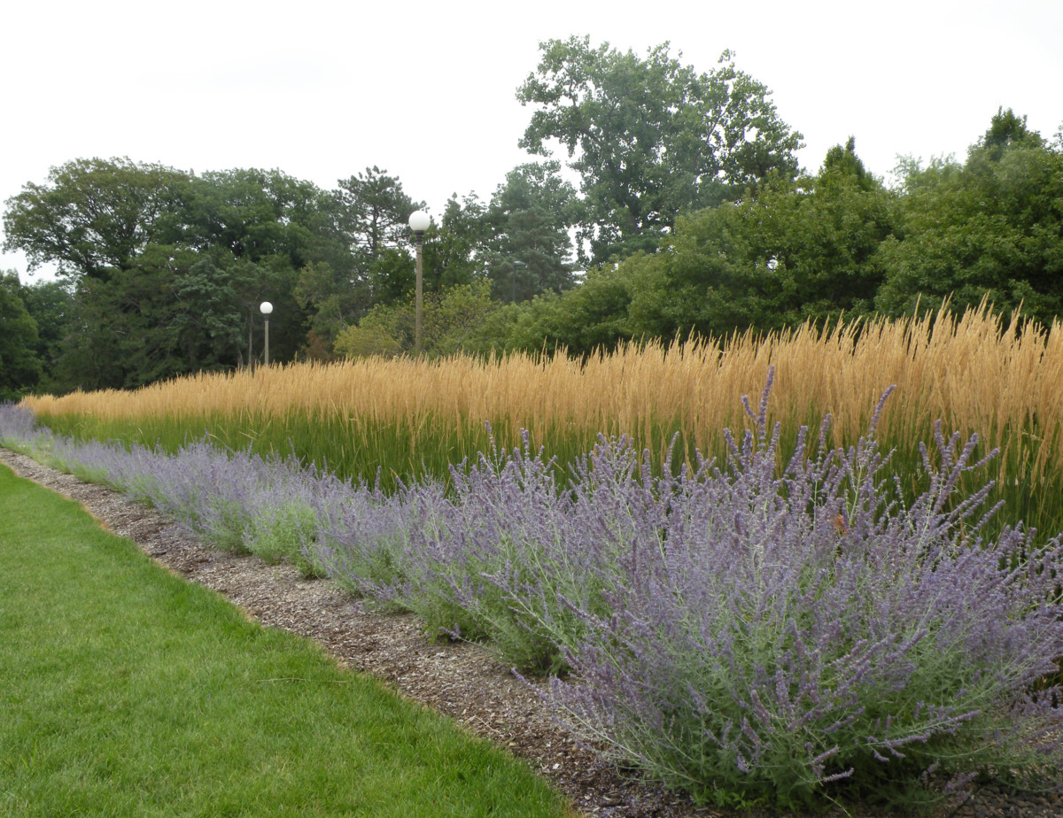 High performance low maintenance bobbie 39 s green thumb for Low growing perennial grasses